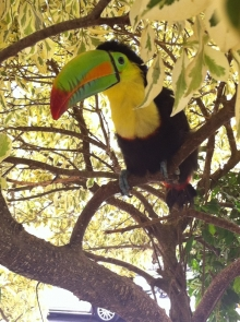 Who doesn't love a hotel with live toucans roaming around the premises?