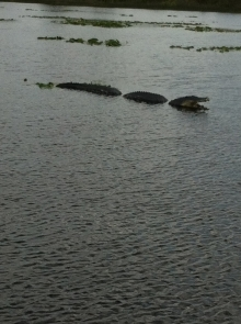 Just because it isn't real doesn't mean the gators aren't out there...