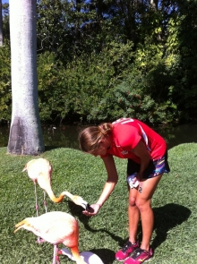Fun with family and flamingos